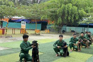 Trung tâm huấn luyện chó uy tín tại Tphcm
