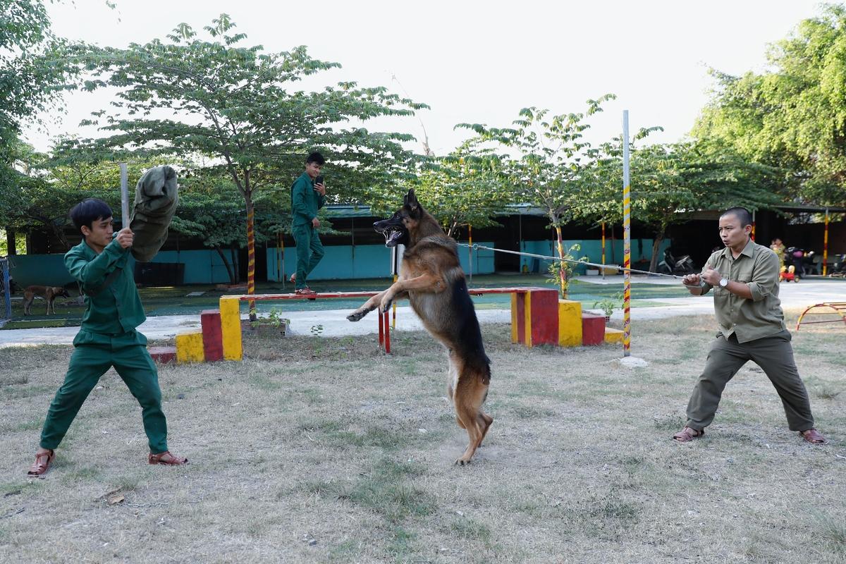 Top những giống chó nghiệp vụ được săn đón nhất