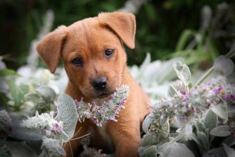 Bài văn tả con chó số 10