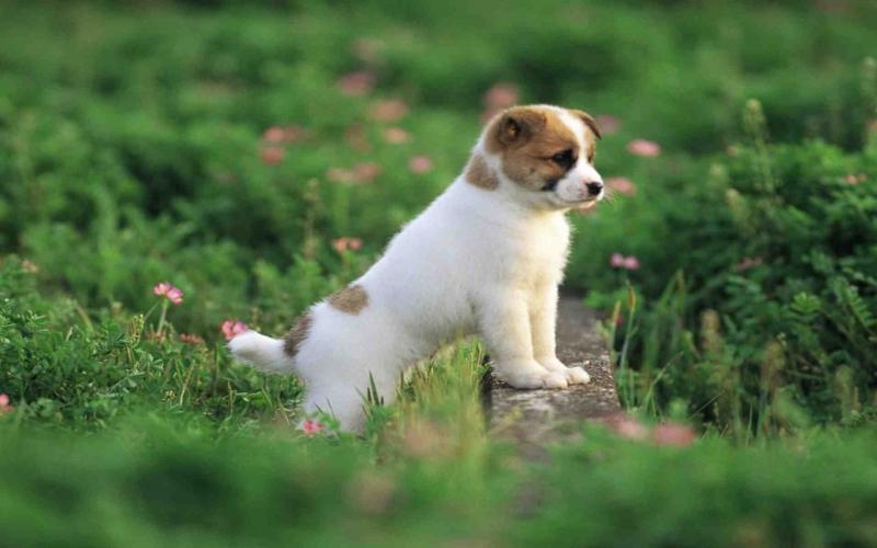 Top 10 bài văn tả con chó hay nhất