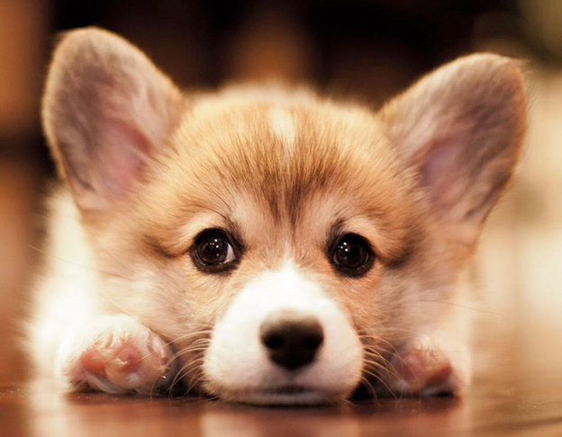Bài văn tả con chó số 7