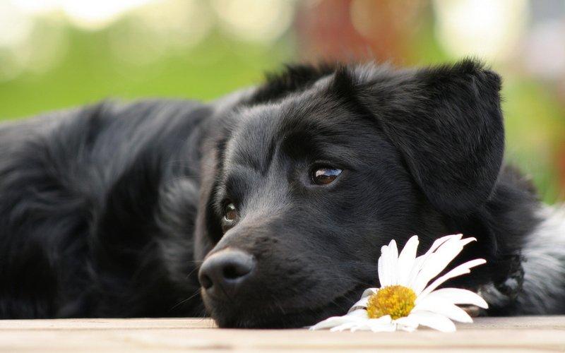 Bài văn tả con chó số 8