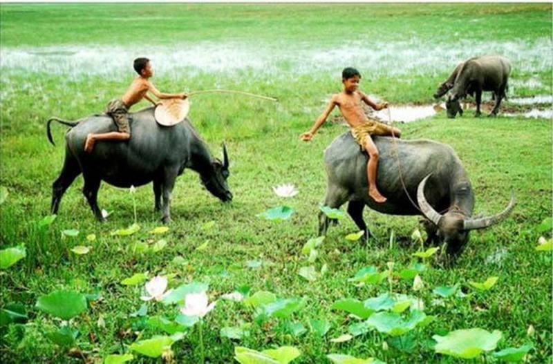 Bài văn thuyết minh về con trâu ở làng quê Việt Nam số 4