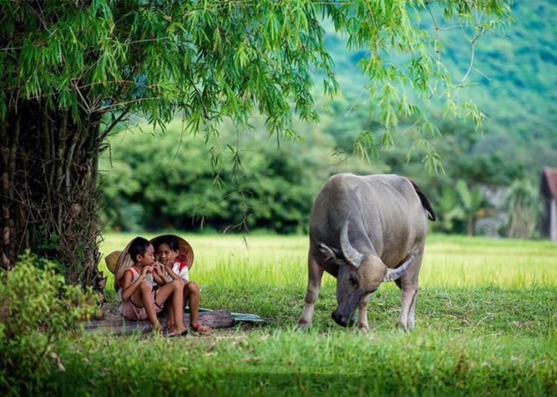 Bài văn thuyết minh về con trâu ở làng quê Việt Nam số 8