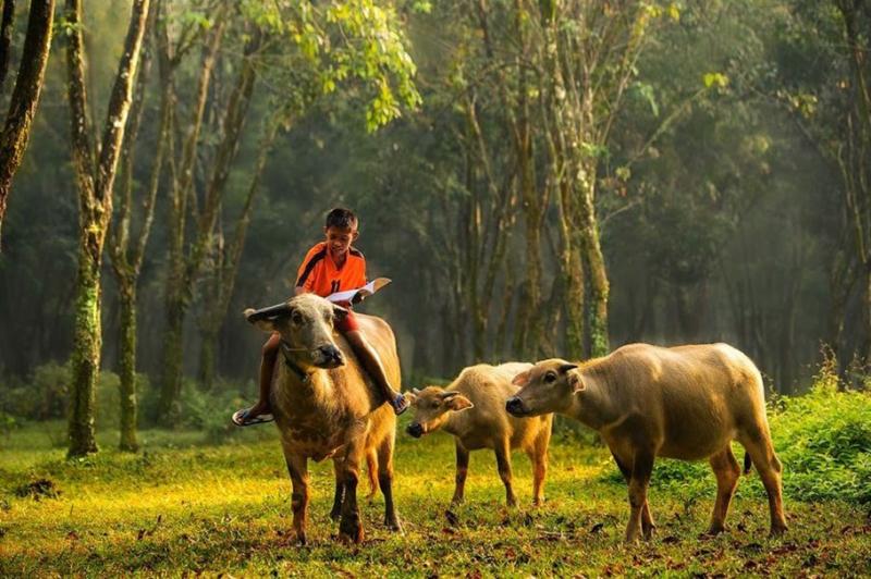 Bài văn thuyết minh về con trâu ở làng quê Việt Nam số 9